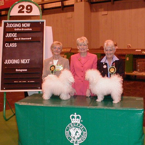 bolognese dogs at crufts 2003